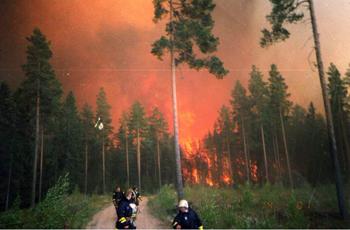 Tammelan Metsäpalo
