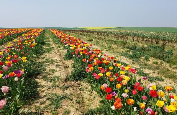 EU:n maatalousympäristö on hyvin erilaista eri alueilla, mikä tuo haasteensa päätöksentekoon. Belgiassa oli huhtikuun lopulla kevät jo pitkällä.