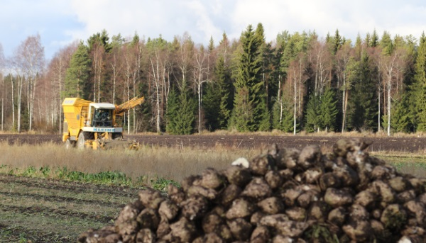 Rouhiainen tuo suurimman osan koneista Turkista, joka on iso sokerijuurikkaan tuottajamaa. Rouhiaisen omalla pellolla juurikaan nostossa oli kuitenkin tällä kertaa käytössä saksalainen Kleine.