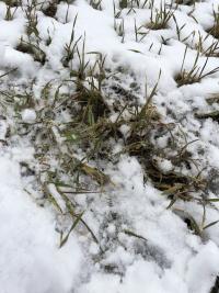 Kuva viime viikolta (16.4) talvisissa maisemissa Lapualla.