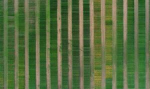 Droonien avulla voi tunnistaa myös erilaisia maaperän muutoksia peltolohkoilla. Kuva: Tinja Pitkämäki / Turun yliopisto
