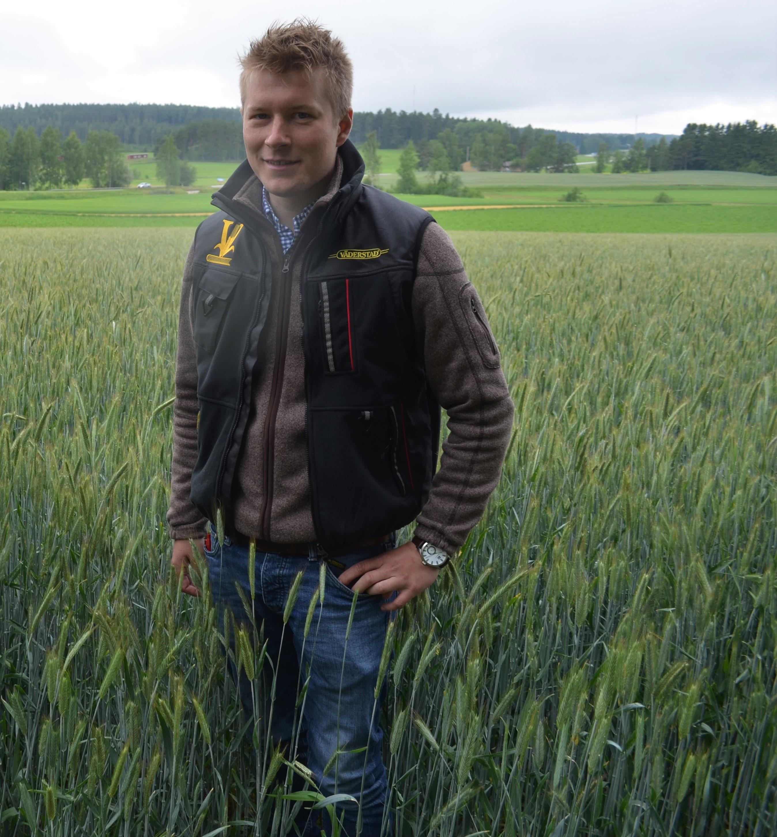 Juho Vainio ruispellossa heinäkuun alussa. Kasvusto oli vahva.