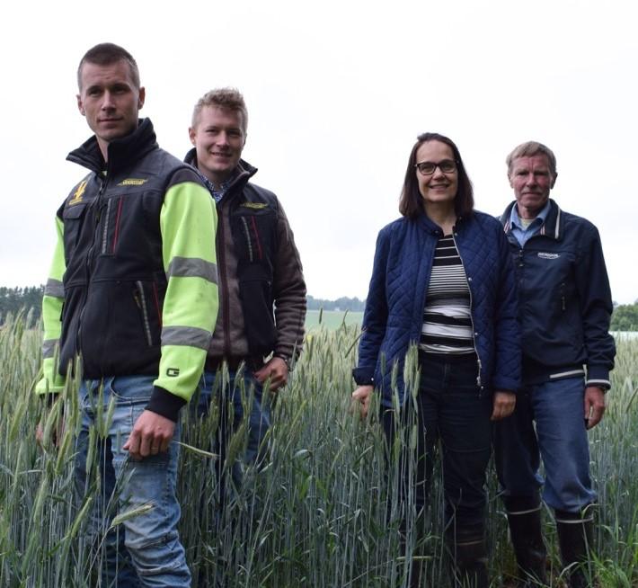 Ruismestari-raadin jäsenet Anne Kerminen Yaralta ja Lasse Matikainen ViljeljänBerneriltä arvioivat tilan ruispeltoja.