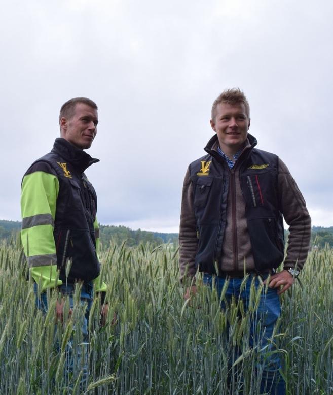 Veljekset Kalle ja Juho Vainio ovat tyytyväisiä ruiskasvustojen kuntoon.